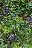 Living wall with all edible plants - The Montessori Centenary Children's Garden. Sponsor: Montessori Centrer International, montessori.org.uk. Chelsea Flower Show 2019.