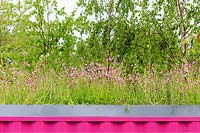 The Montessori Centenary Children's Garden. Green roof over bright pink building, featuring Lychnis flos-cuculi - Ragged Robin. Sponsor:  Montessori Centre International