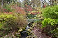 Cascading stream in the lower part of the garden, flanked by Japanese maples - Acer palmatum cvc. in spring leaf. Azaleas and pool in the background. Exbury Gardens, Hampshire.