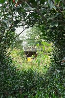 Beehives seen through peephole in Ilex hedge