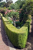 View along corner of Buxus - Box - edging containing a bed of standard Rosa - Rose and mixed planting