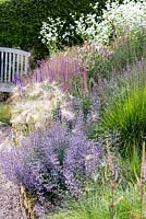 Hordeum jubatum 'Early Pink' and Calamintha nepeta subsp. nepeta 'Blue Cloud' amongst Molinia, Salvia and white daisy Erigeron annuus