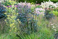 Actaea 'Queen of Sheba' and Patrinia aff. punctiflora amongst Molinia caerulea subsp. caerulea 'Poul Petersen'