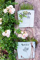 Decorative wall pockets planted with Thymus - Thyme