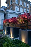 Row of feature square pots, each planted with small tree and with lighting on sides of the pots and foliage