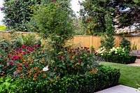 West London garden with artificial lawn. In the background there is a border featuring Monarda Fire Ball, Acer palmatum, Helenium Moerheim Beauty, Euonymus Jean Hughes.