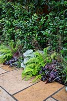Contemporary garden in West London with herbaceous borders. Planting includes Brunnera macrophylla Jack Frost, Polystichim setiferum, Heuchera Forever Purple, Prunus lusitancia Angustifolia, Carex morrowii Ice Dance