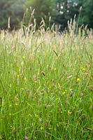 Tall meadow grass