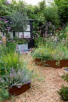 Modern cottage garden in West London. In corton steel raised beds planting includes Gaura Whirling Butterflies - tall white flowers, Lychnis coronaria - pink flowers, Nepeta 'Summer Magic' - Catmint, Eryngium Big Blue - Blue thistle and silver spikey leaves, Stachys byzantina Big Ears - Silver hair leaves with long silver flower spikes, Verbascum 'Caribbean Crush' - Tall apricot flower spikes, Anthemis 'Sauce Hollandaise' - daises, Echinops 'Taplow Blue' - Round thistle, Artemisia 'Nana' - silver soft low growing, Helictotrichon sempervirens - blue green grass at centre of main bed, stipa arundinacea - orange red grass, Euphorbia characias wulfenii helichrysum italicum - silver foliage curry plant.