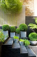 Black steps with metal containers of herbs, Buxus balls in concrete square containers and concrete trough of Bamboo.