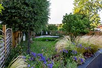 Contemporary garden in Wimbledon. Planting includes Agapanthus Navy Blue, Stipa tenuissima, heuchera berry smoothie in a raised bed overlooking lawn area with children trampoline.