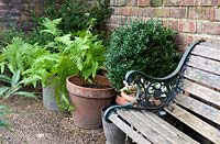 Wooden bench with pots of greenery, including ferns.