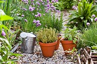 Herb garden with gravel path, with pots of Rosmarinus officinalis - Rosemary, Salvia officinalis - Sage and Thymus x citriodorus 'Aureus' - Thyme, ready for planting and watering in