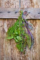 Bunch of mixed herbs hung up to dry