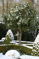 The Potager with Buxus - box hedging and topiary shapes, Taxus baccata - yew hedge. Large Laurus nobilis - standard Bay tree with a covering of snow. The Old Rectory, Suffolk, UK