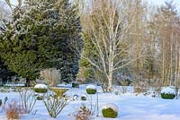 Buxus - box balls, bed with Rosa - roses, shrubs and perennials, Betula - silver birch tree with snow in late February. The Old Rectory, Suffolk, UK