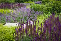 Salvia nemorosa 'Caradonna', Carex oshimensis 'Everlime' - Japanese Sedge and Nepeta racemosa 'Walkers Low' - Catmint - Bellevue Botanical Garden