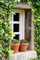 Pots of succulents on a window sill framed by neatly clipped ivy at Broadwoodside, Gifford, East Lothian in Scotland.