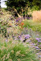 Mixed border of herbaceous perennials and grasses including Stipa gigantea, asters, Verbena bonariensis, Calamagrostis x acutiflora 'Karl Foerster', lavender and Pennisetum alopecuroides 'Hameln'
