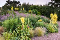 Gravel garden planted with Veronicastrum virginicum 'Fascination', Verbascum olympicum and Stipa tenuissima.