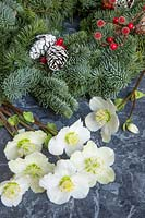 Natural Christmas decorations - Pine wreath with cones and Helleborus niger 'Christmas Carol' - Hellebore flowers