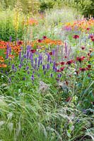 Herbaceous borders at Bluebell Cottage Gardens, Dutton, Cheshire. Planting includes Helenium 'Sahins Early Flowerer', Agastache 'Liquorice Blue', Salvia nemorosa 'Amethyst', Stipa 'Wind Whispers', and Monarda 'Jacob Kline'