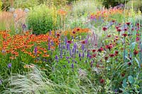 Herbaceous borders at Bluebell Cottage Gardens, Dutton, Cheshire. Planting includes Helenium 'Sahins Early Flowerer', Agastache 'Liquorice Blue', Salvia nemorosa 'Amethyst', Stipa 'Wind Whispers', and Monarda 'Jacob Kline'.