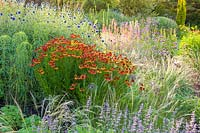 Herbaceous borders at Bluebell Cottage Gardens, Dutton, Cheshire. Planting includes Nepeta, Verbena bonariensis, Echinops ritro and Heleniums.