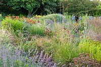 Herbaceous borders at Bluebell Cottage Gardens, Dutton, Cheshire. Planting includes Nepeta, Monarda, Verbena bonariensis, Dierama pulcherrimum, Hemerocallis 'Stafford' Echinops ritro.