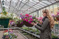 Woman buying hanging baskets in greenhouse at garden centre, Perry's Garden Centre, Broxted.