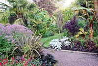 The Exotic Garden at Abbeywood Gardens. Planting includes Salvia coccinea 'Lady in Red', Geranium palmatum, Trachycarpus fortunei, Ensete ventricosum 'Maurelii', Pseudopanax crassifolius, Paulownia tomentosa phormium, Cotinus coggygria 'Royal Purple', Tetrapanax papyrifera and Senecio 'Angel Wings'.