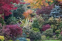 Autumnal colours of mixed acers, conifers, photinias, phormium and azaleas at Four Seasons garden, Walsall, West Midlands.