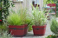 Mixed grasses in red wooden tubs