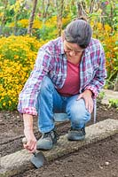 Woman using hand trowel to create a mounted row ready for planting