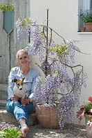 Woman with pet dog siting next to flowering Wisteria sinensis in a pot by house