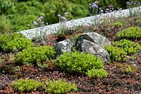 Green roof with carpet of alpines, including stonecrop and carnations.