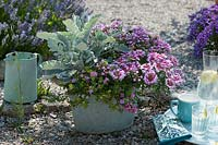 Verbena Vepita 'Amethyst Kiss', white felted ragwort and pink blooming snowflake flower in a zinc tub.