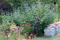 Bee-friendly summer bed with thistle, Coneflower and butterfly bush