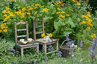Wooden chairs with cups on a tray beside yellow blooming flowers