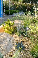 Drought-tolerant planting of Agave, Thymus, Santolina, Eryngium  and Lychnis coronaria 'Alba' in The Thames Water Flourishing Future Garden. RHS Hampton Court Palace Garden Festival, 2019.