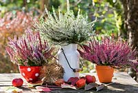Autumn floral arrangement with  Calluna vulgaris.