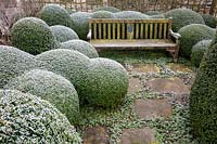 Frosty clipped Box balls and bench at Littlethorpe Manor, Yorkshire, UK. Designed by Eddie Harland.