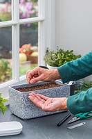 Woman carefully sowing seeds in container