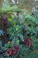 Musa, Paulownia, Ricinus, Cuphea, Solenostemon and other tropical foliage - St James Park, London