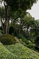 View of slope of clipped phillyrea angustifolia, buxus sempervirens and azalea japonica in Les Jardins d Etretat, Normandy, France