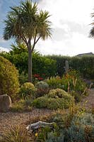 The Beth Chatto Garden gravel borders including Cordyline and Salvia officinalis 'Icterina' 'common variegated sage
