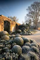 Frosted topiary the borders of the Winter garden at Wakehurst, West Sussex, UK.