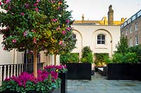 The terrace with Camellia sasanqua 'Cleopatra' trained as standard and underplanted with Cyclamen persicum 'Verano Neon Pink' in black containers, view of private seating area beyond