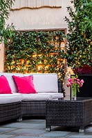 Outdoor seating area with pink cushions, with wall-mounted trellis supporting evergreen climber provides shelter