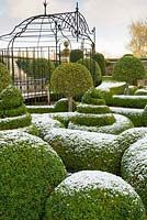 Clipped Buxus - Box - dusted with snow plus mophead Prunus lusitanica 'Myrtifolia', metal arbour in background